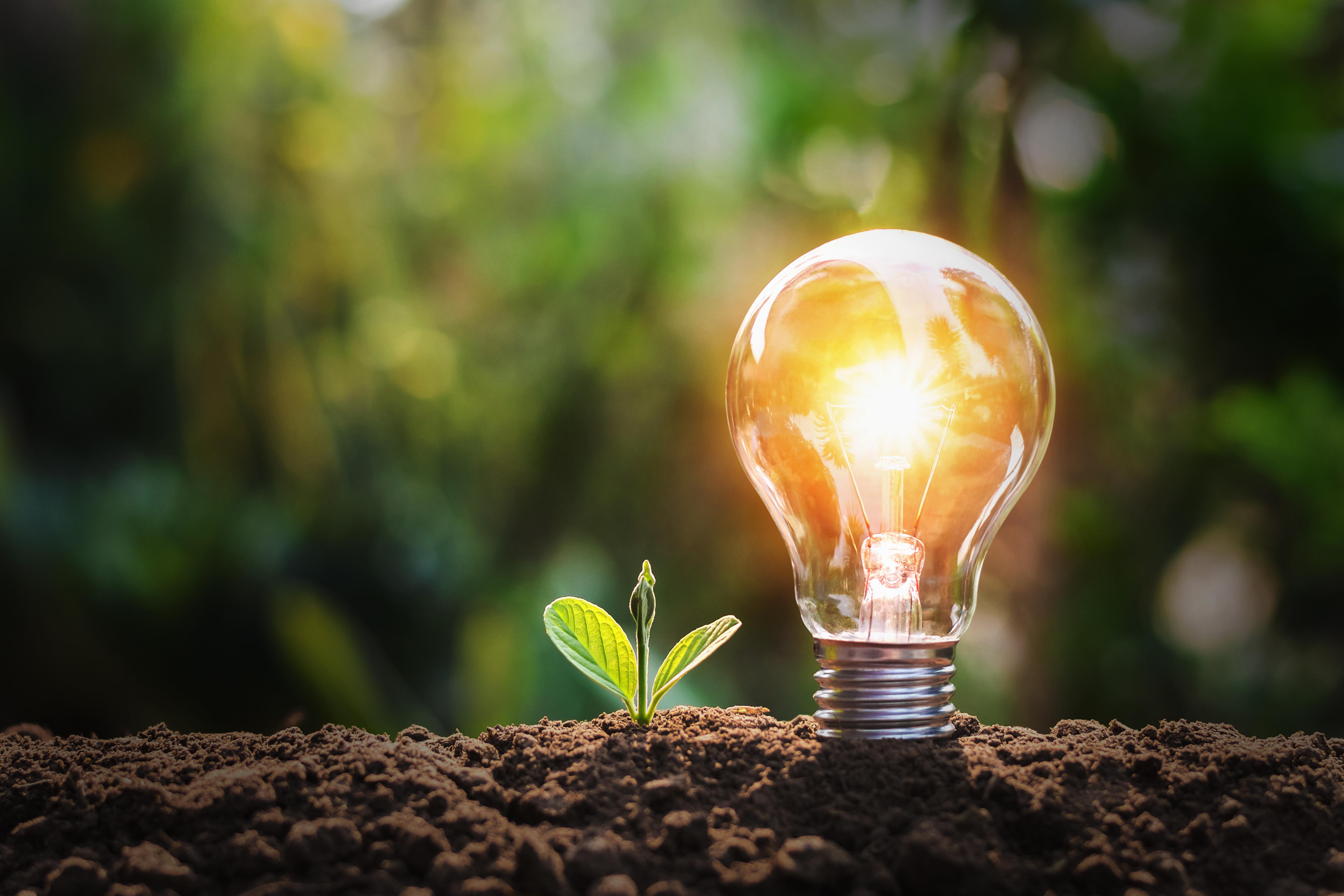 Think Sustainable Lightbulb